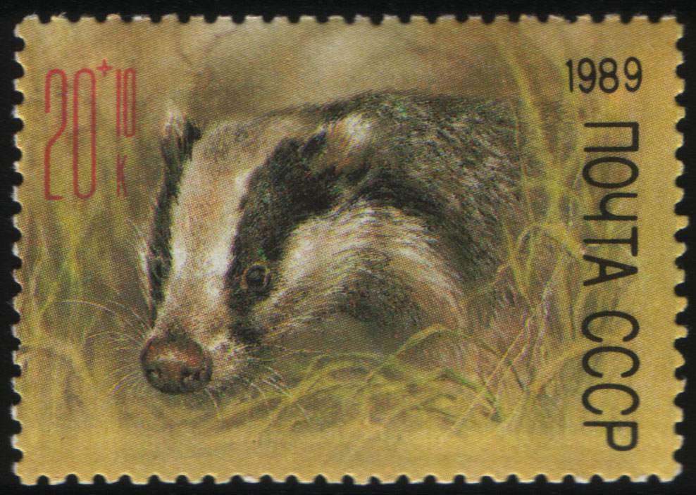 Image of a postal stamp for the USSR, Zoo Relief Fund of a badger, from 1989.